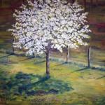 Blommande körsbär - 112