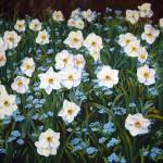Blomsterprakt i pingsttid - 268