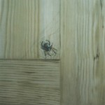 Spindel på ådrad kökslucka