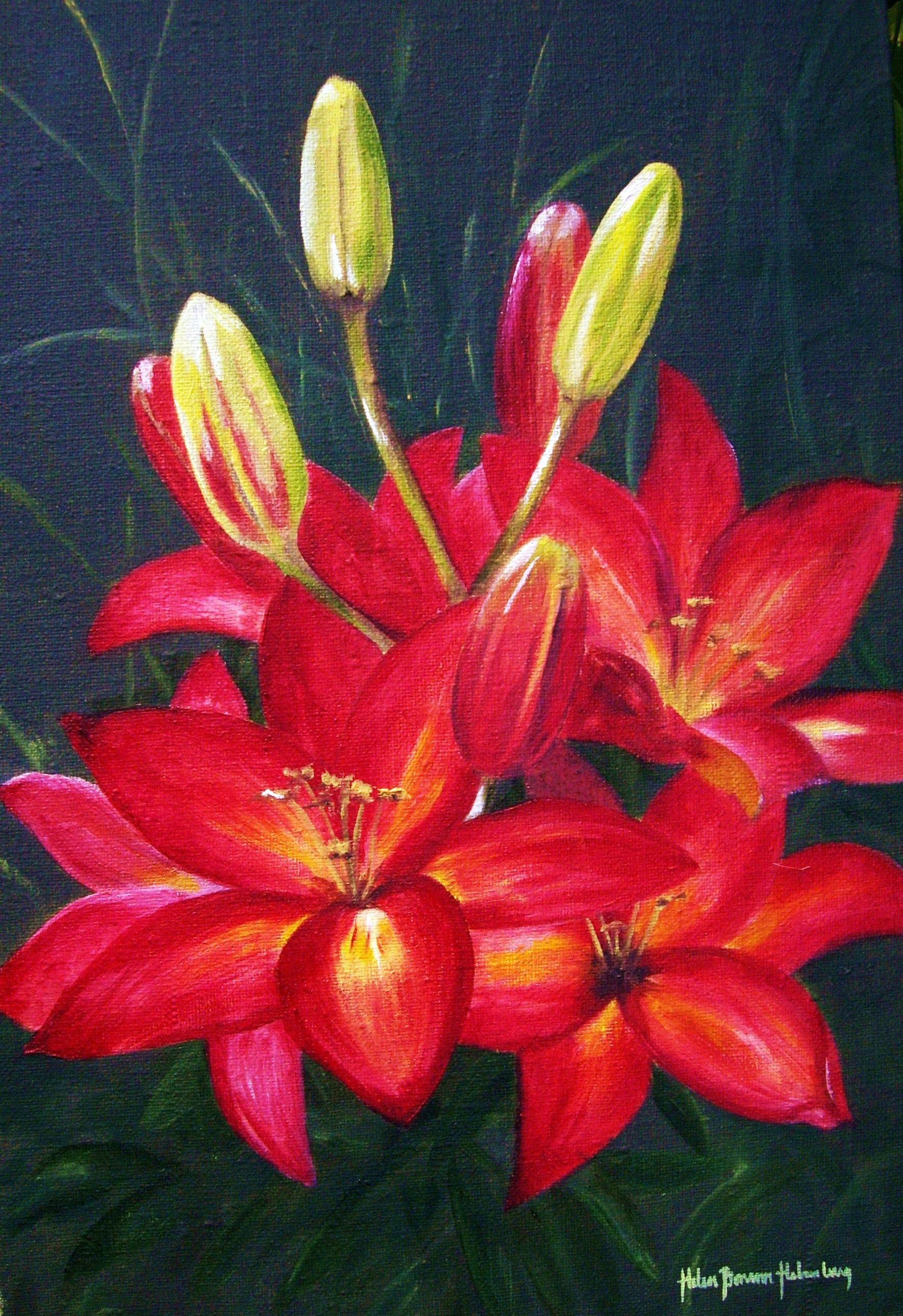 Röd liljeprakt 509