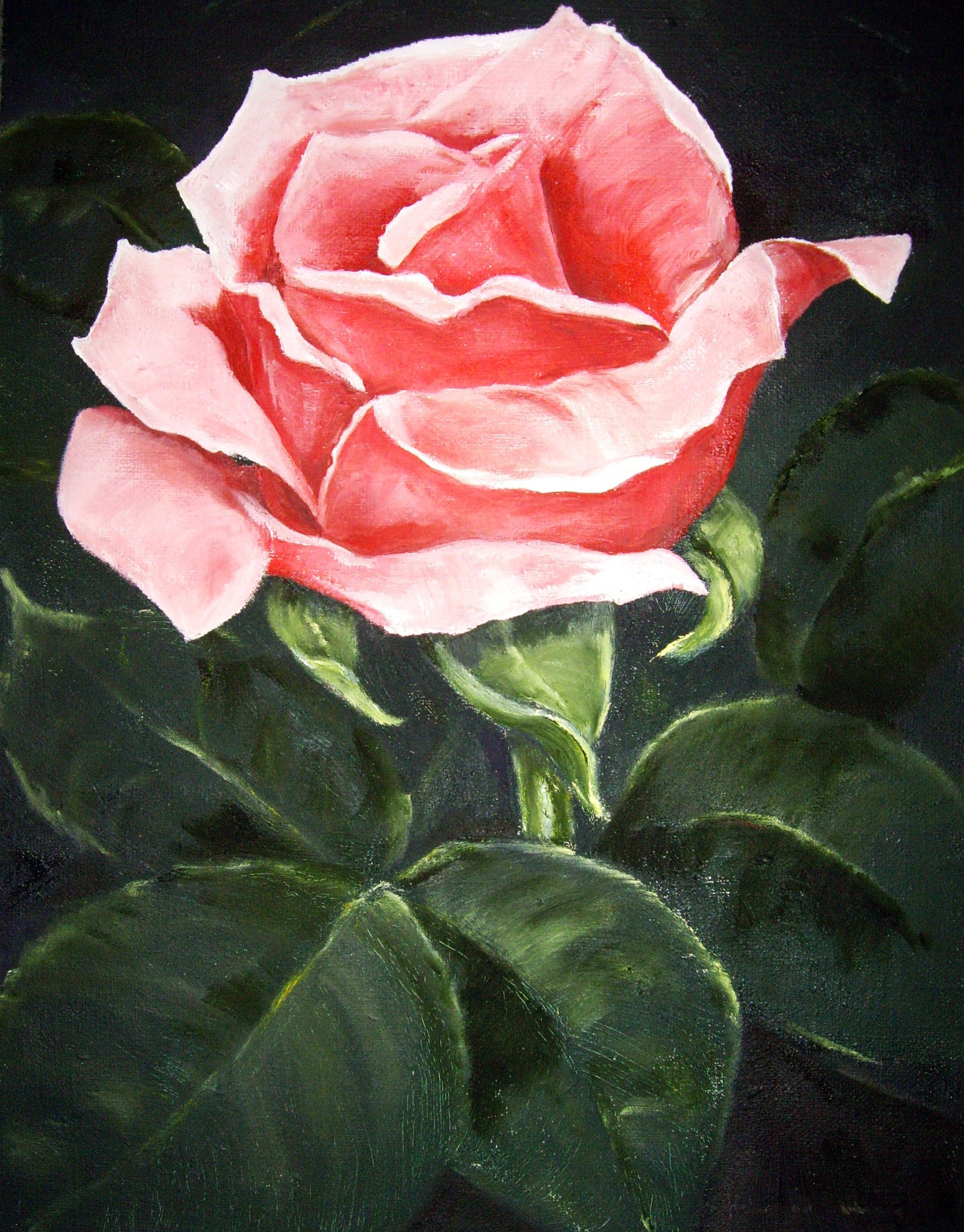 Rosa ros med blad 501