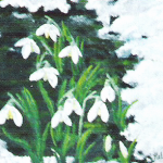 Snödroppar - 148