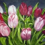 Tulpaner i rött och rosa 508