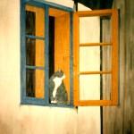 Katten i fönstret - 071