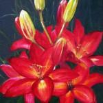Röd liljeprakt - 509