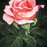 Rosa ros med blad - 501